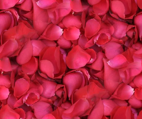 Rose Petals Seamless Backgrounds